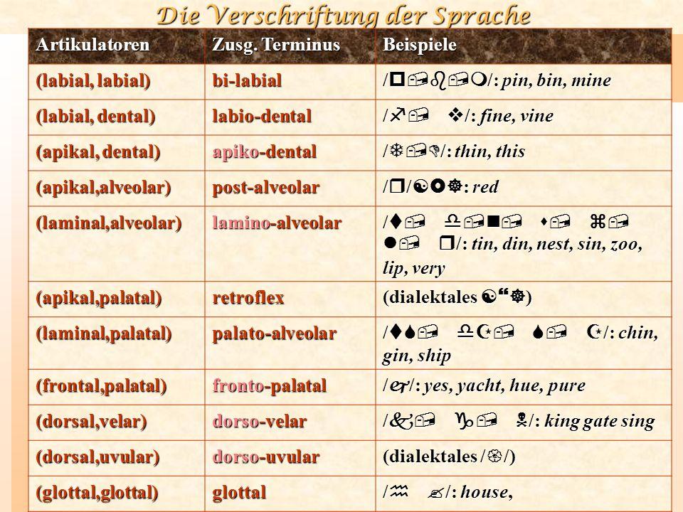 Artikulatoren Zusg. Terminus. Beispiele. (labial, labial) bi-labial. /p,b,m/: pin, bin, mine. (labial, dental)
