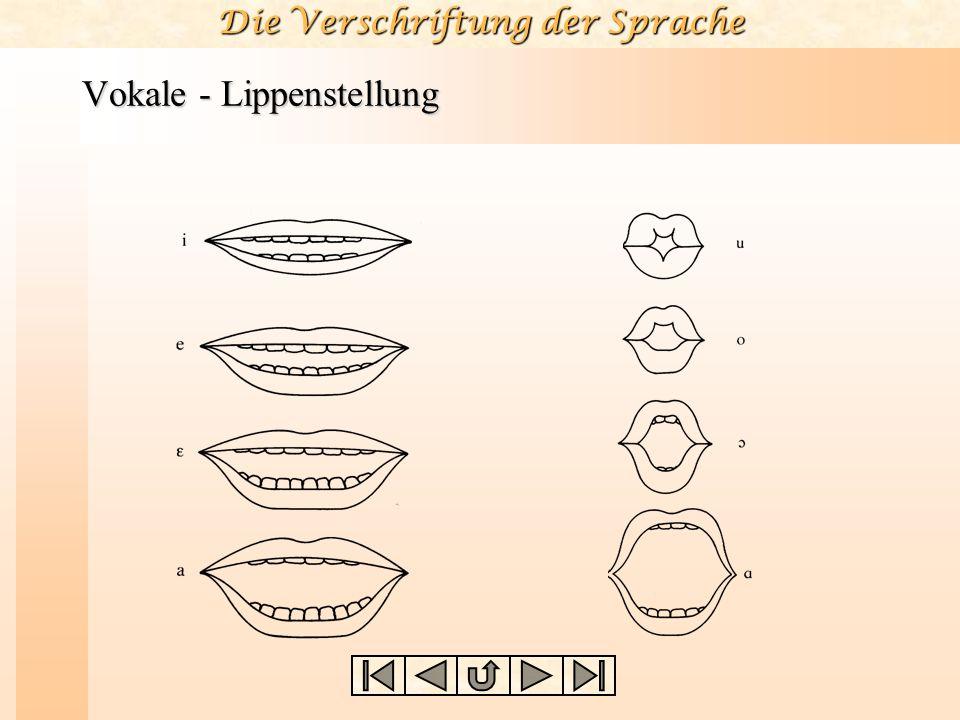 Vokale - Lippenstellung