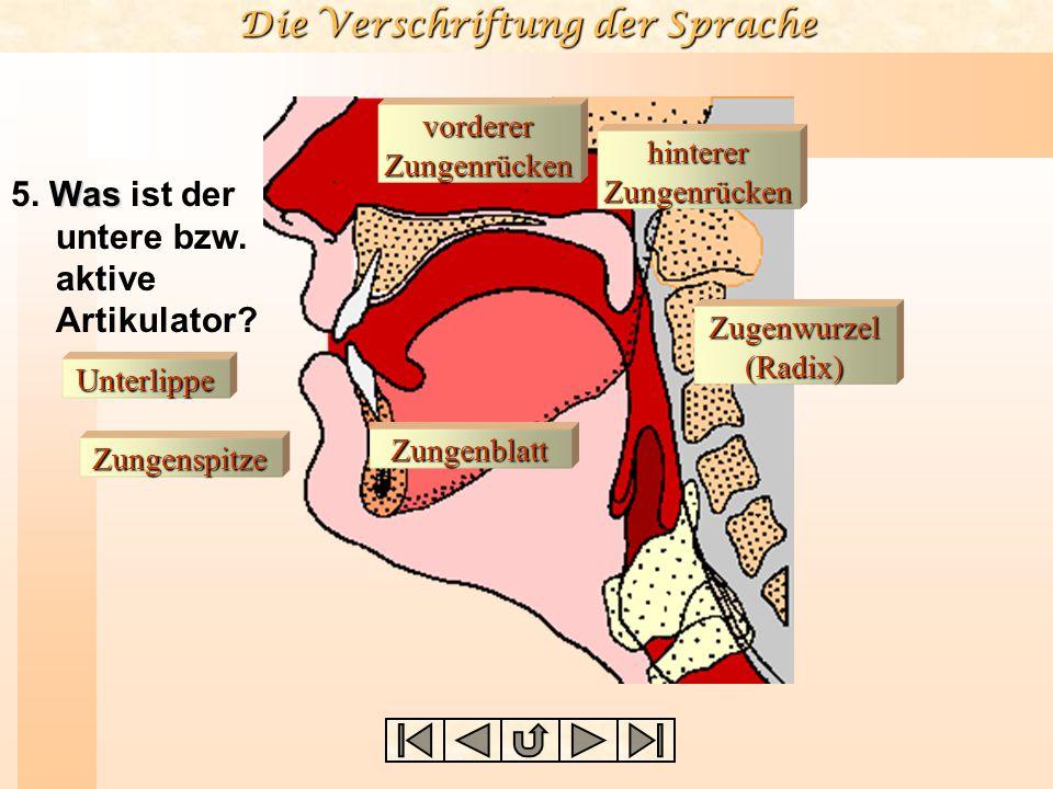 5. Was ist der untere bzw. aktive Artikulator