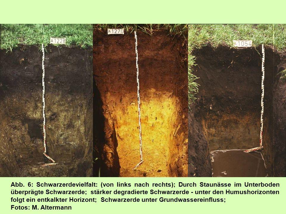 Abb. 6: Schwarzerdevielfalt: (von links nach rechts); Durch Staunässe im Unterboden überprägte Schwarzerde; stärker degradierte Schwarzerde - unter den Humushorizonten folgt ein entkalkter Horizont; Schwarzerde unter Grundwassereinfluss;