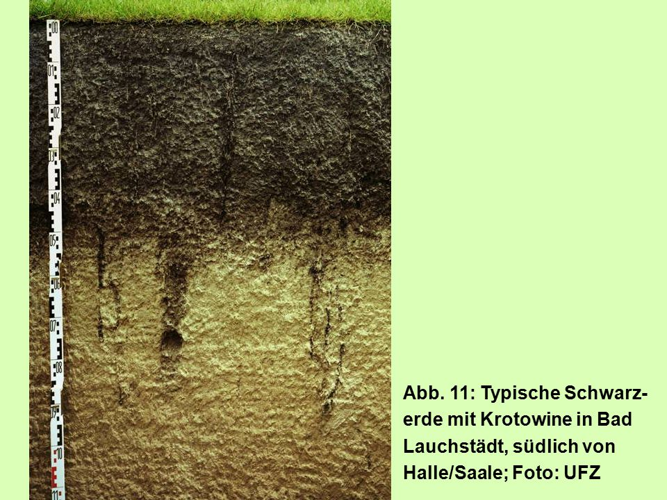 Abb. 11: Typische Schwarz-erde mit Krotowine in Bad Lauchstädt, südlich von Halle/Saale; Foto: UFZ