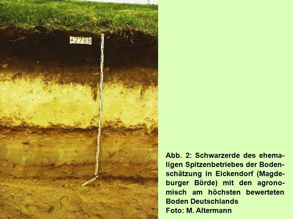 Abb. 2: Schwarzerde des ehema-ligen Spitzenbetriebes der Boden-schätzung in Eickendorf (Magde-burger Börde) mit den agrono-misch am höchsten bewerteten Boden Deutschlands