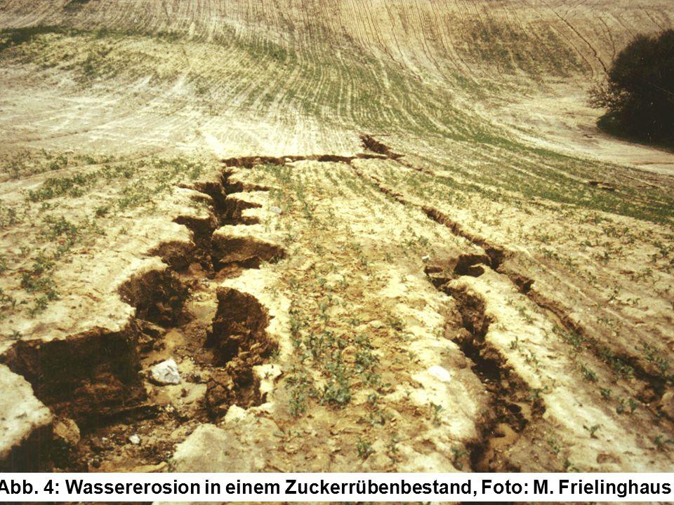 Abb. 4: Wassererosion in einem Zuckerrübenbestand, Foto: M