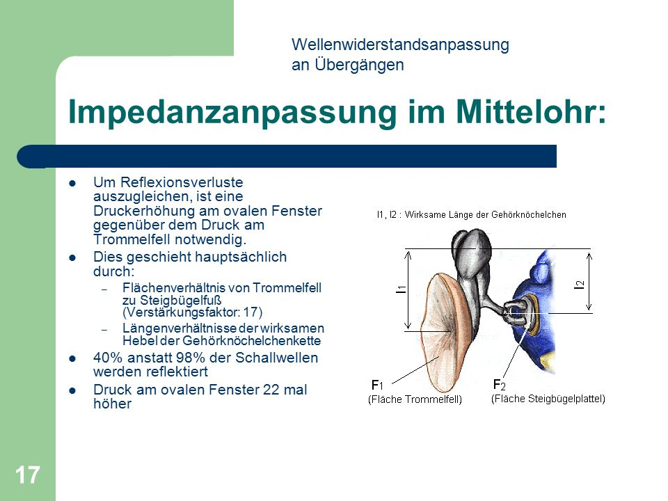 Impedanzanpassung im Mittelohr: