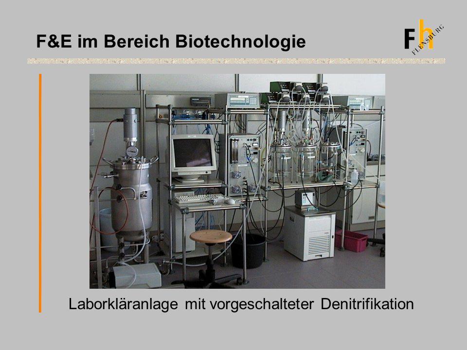 Laborkläranlage mit vorgeschalteter Denitrifikation