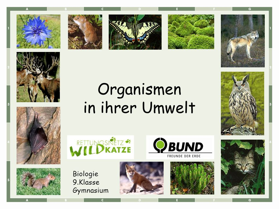 Organismen in ihrer Umwelt