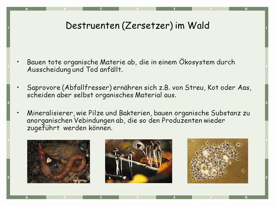 Destruenten (Zersetzer) im Wald