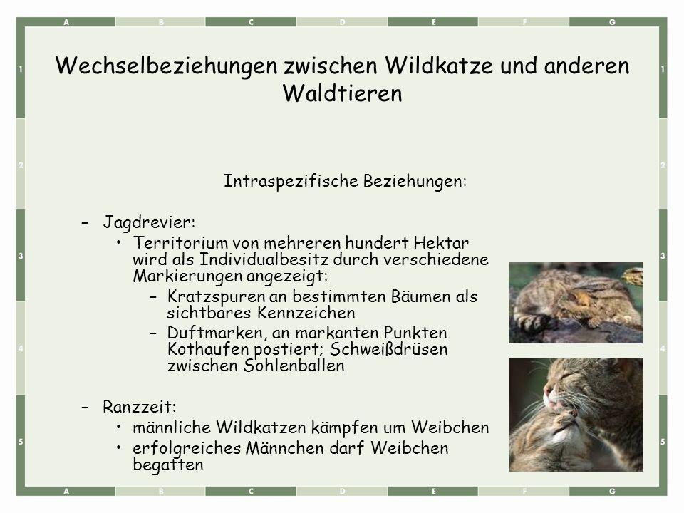 Wechselbeziehungen zwischen Wildkatze und anderen Waldtieren