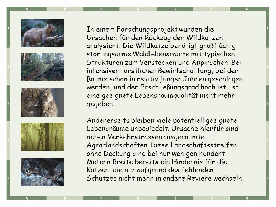 In einem Forschungsprojekt wurden die Ursachen für den Rückzug der Wildkatzen analysiert: Die Wildkatze benötigt großflächig störungsarme Waldlebensräume mit typischen Strukturen zum Verstecken und Anpirschen. Bei intensiver forstlicher Bewirtschaftung, bei der Bäume schon in relativ jungen Jahren geschlagen werden, und der Erschließungsgrad hoch ist, ist eine geeignete Lebensraumqualität nicht mehr gegeben.