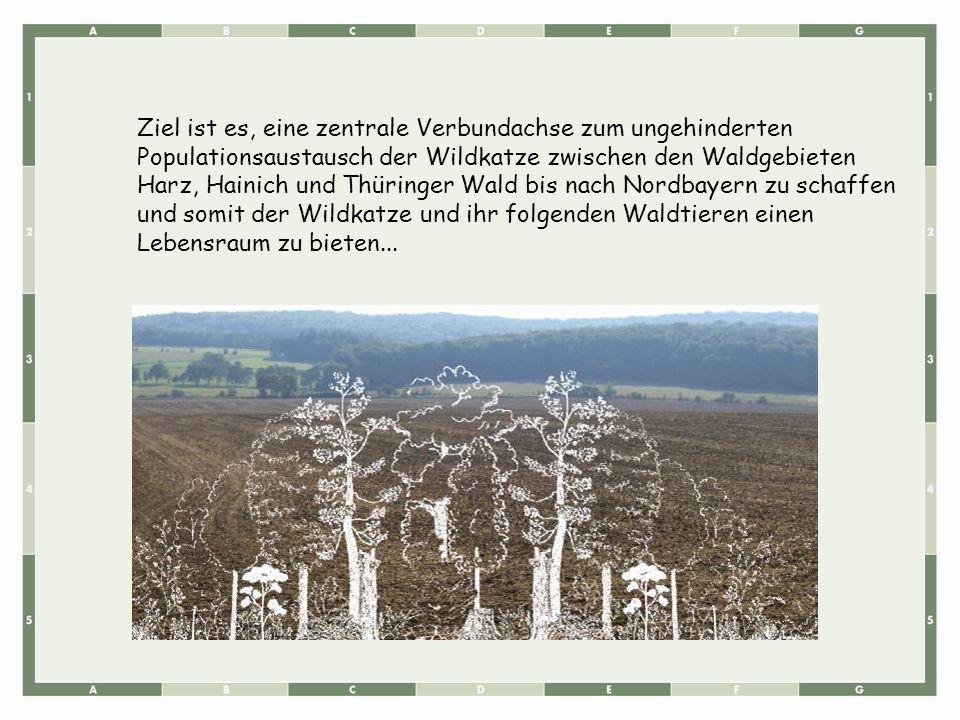 Ziel ist es, eine zentrale Verbundachse zum ungehinderten Populationsaustausch der Wildkatze zwischen den Waldgebieten Harz, Hainich und Thüringer Wald bis nach Nordbayern zu schaffen und somit der Wildkatze und ihr folgenden Waldtieren einen Lebensraum zu bieten...