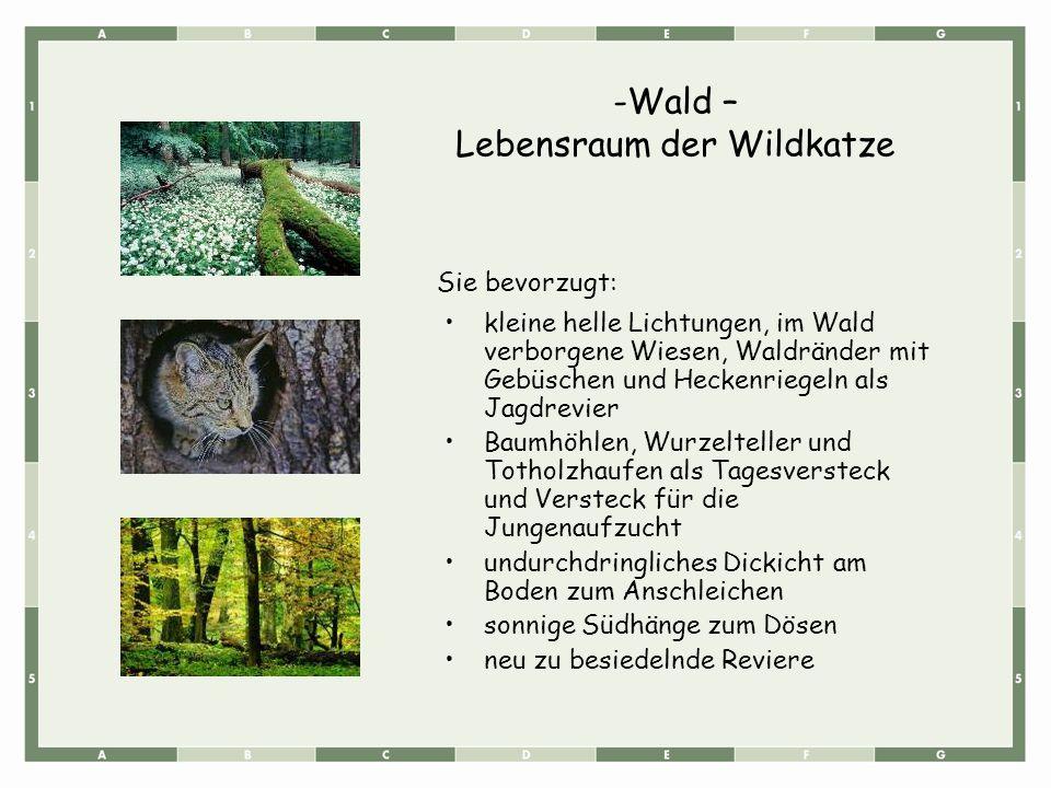 Lebensraum der Wildkatze