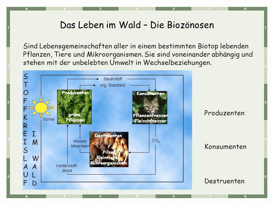 Das Leben im Wald – Die Biozönosen