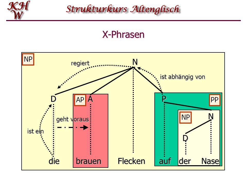 X-Phrasen N D A P N D die brauen Flecken auf der Nase NP AP PP NP