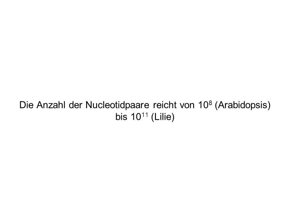 Die Anzahl der Nucleotidpaare reicht von 108 (Arabidopsis) bis 1011 (Lilie)