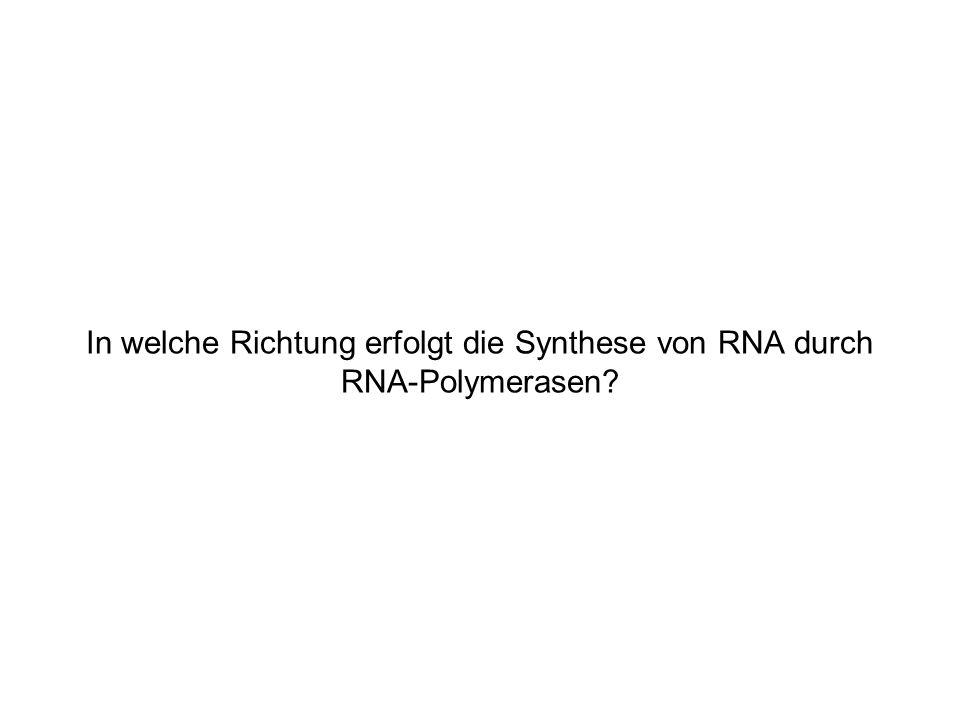 In welche Richtung erfolgt die Synthese von RNA durch RNA-Polymerasen