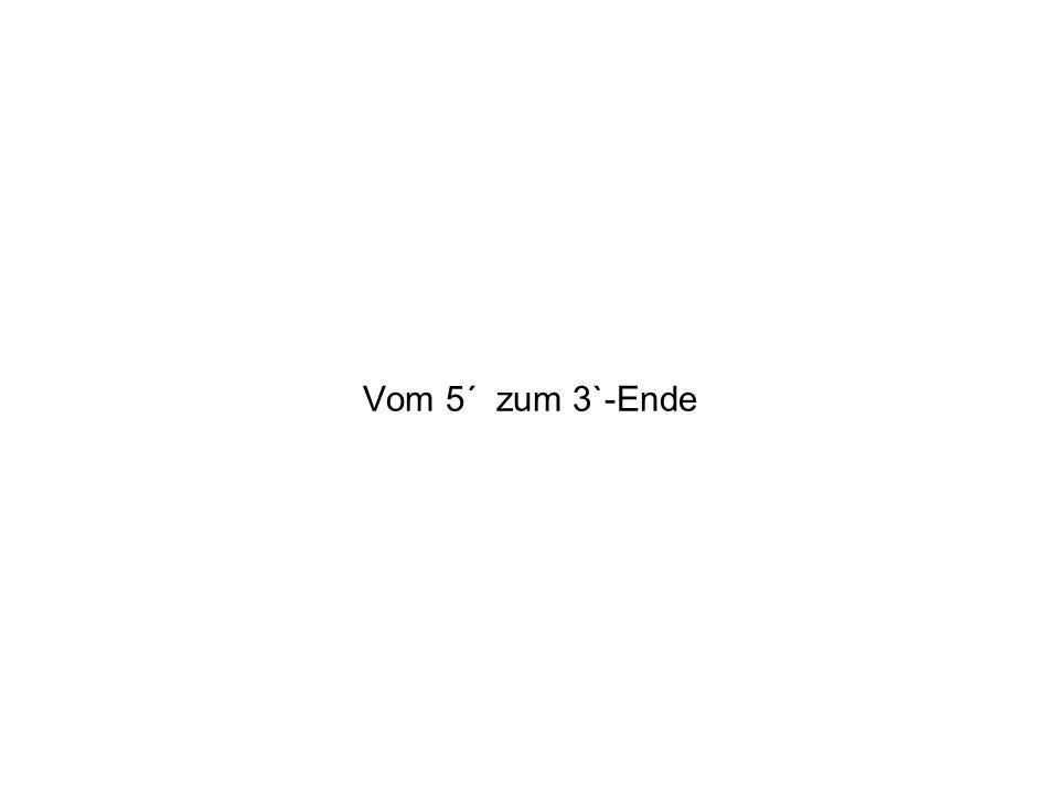 Vom 5´ zum 3`-Ende