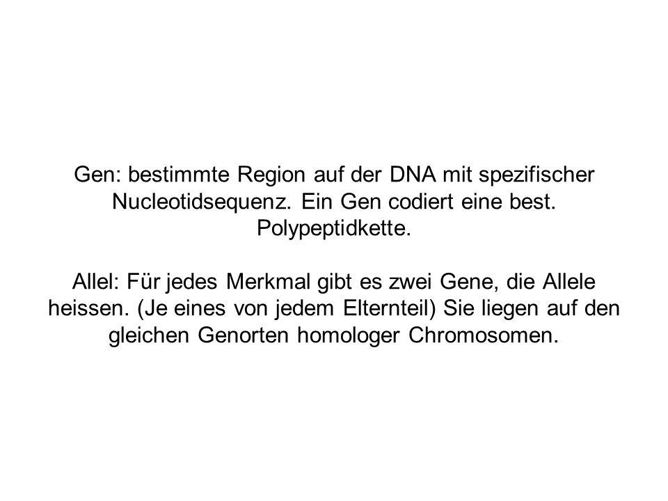 Gen: bestimmte Region auf der DNA mit spezifischer Nucleotidsequenz