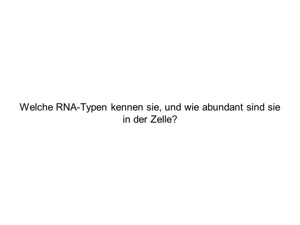 Welche RNA-Typen kennen sie, und wie abundant sind sie in der Zelle