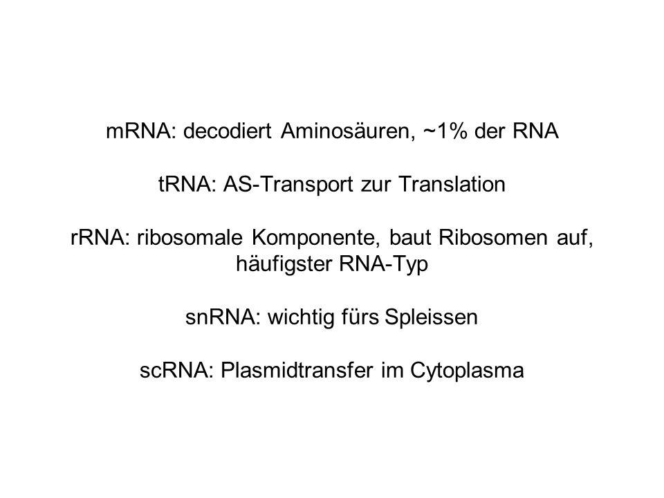 mRNA: decodiert Aminosäuren, ~1% der RNA tRNA: AS-Transport zur Translation rRNA: ribosomale Komponente, baut Ribosomen auf, häufigster RNA-Typ snRNA: wichtig fürs Spleissen scRNA: Plasmidtransfer im Cytoplasma