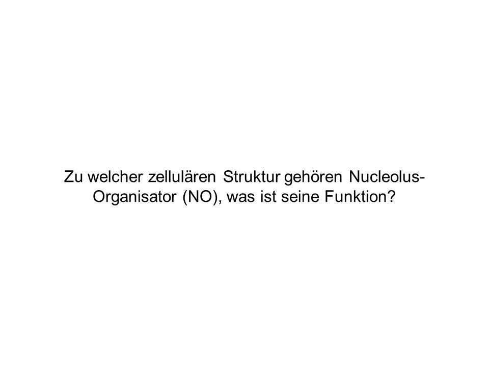 Zu welcher zellulären Struktur gehören Nucleolus-Organisator (NO), was ist seine Funktion