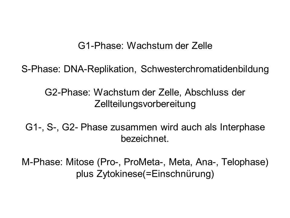 G1-Phase: Wachstum der Zelle S-Phase: DNA-Replikation, Schwesterchromatidenbildung G2-Phase: Wachstum der Zelle, Abschluss der Zellteilungsvorbereitung G1-, S-, G2- Phase zusammen wird auch als Interphase bezeichnet.