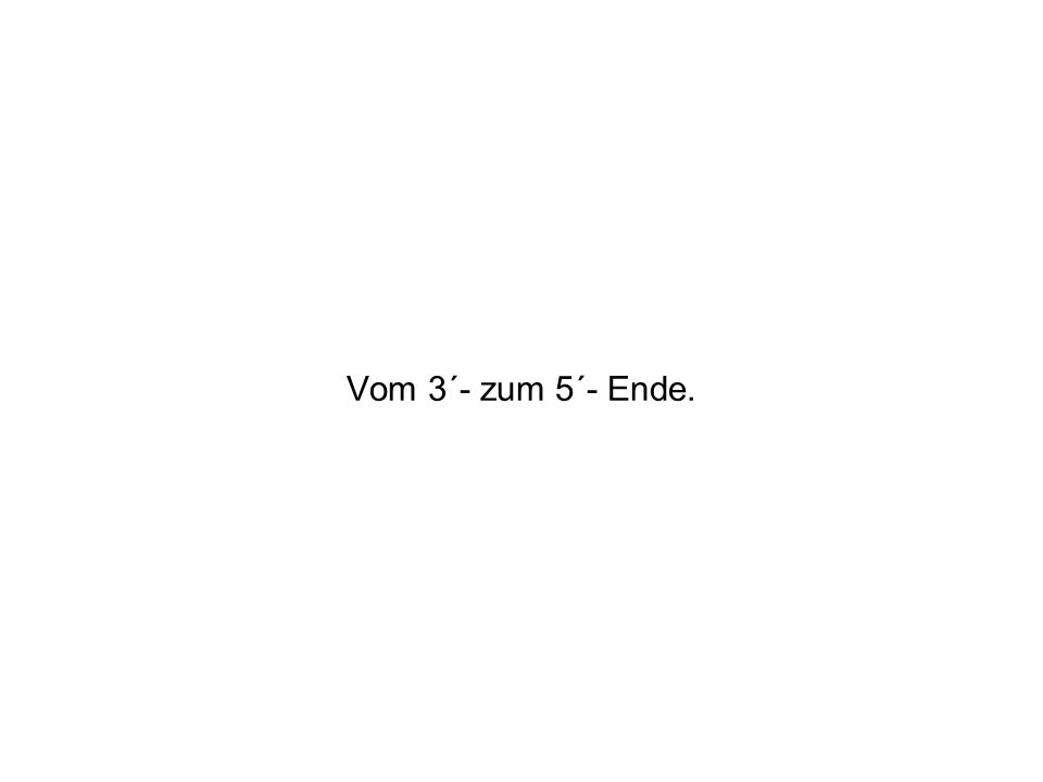 Vom 3´- zum 5´- Ende.