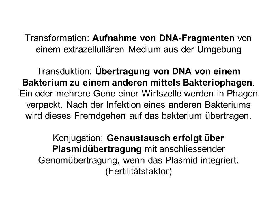 Transformation: Aufnahme von DNA-Fragmenten von einem extrazellullären Medium aus der Umgebung Transduktion: Übertragung von DNA von einem Bakterium zu einem anderen mittels Bakteriophagen.