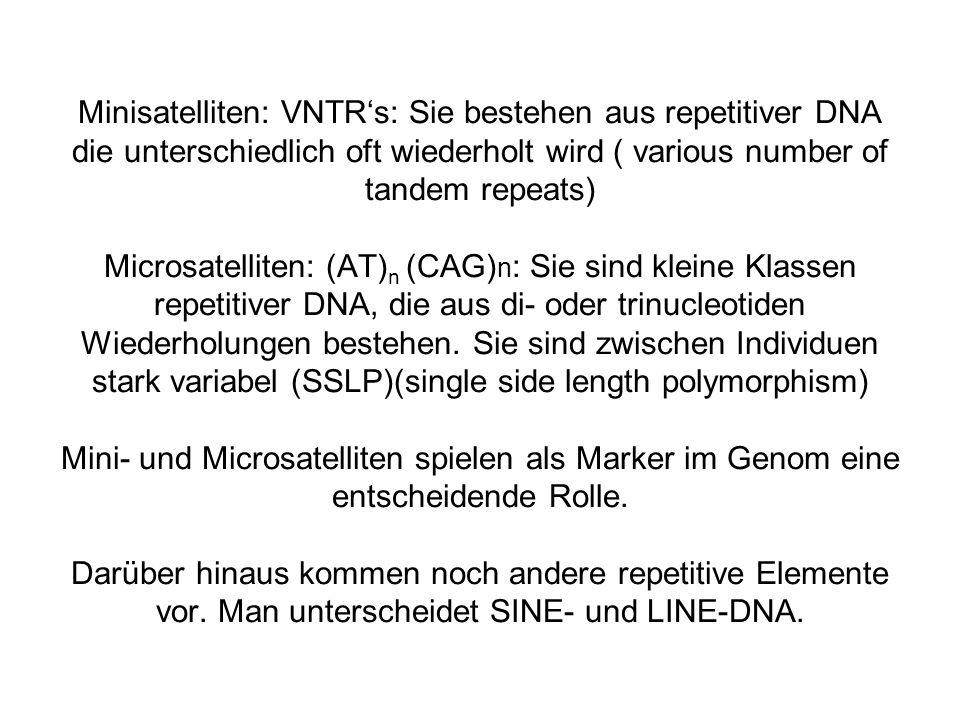 Minisatelliten: VNTR's: Sie bestehen aus repetitiver DNA die unterschiedlich oft wiederholt wird ( various number of tandem repeats) Microsatelliten: (AT)n (CAG)n: Sie sind kleine Klassen repetitiver DNA, die aus di- oder trinucleotiden Wiederholungen bestehen.