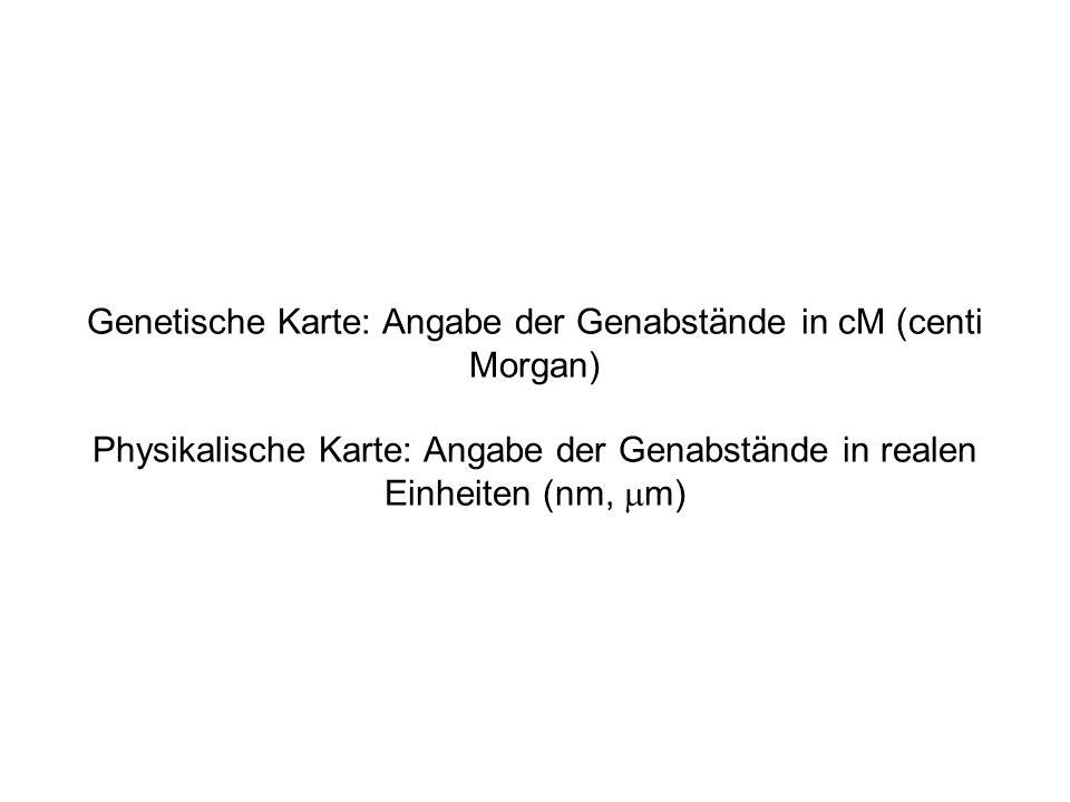 Genetische Karte: Angabe der Genabstände in cM (centi Morgan) Physikalische Karte: Angabe der Genabstände in realen Einheiten (nm, mm)