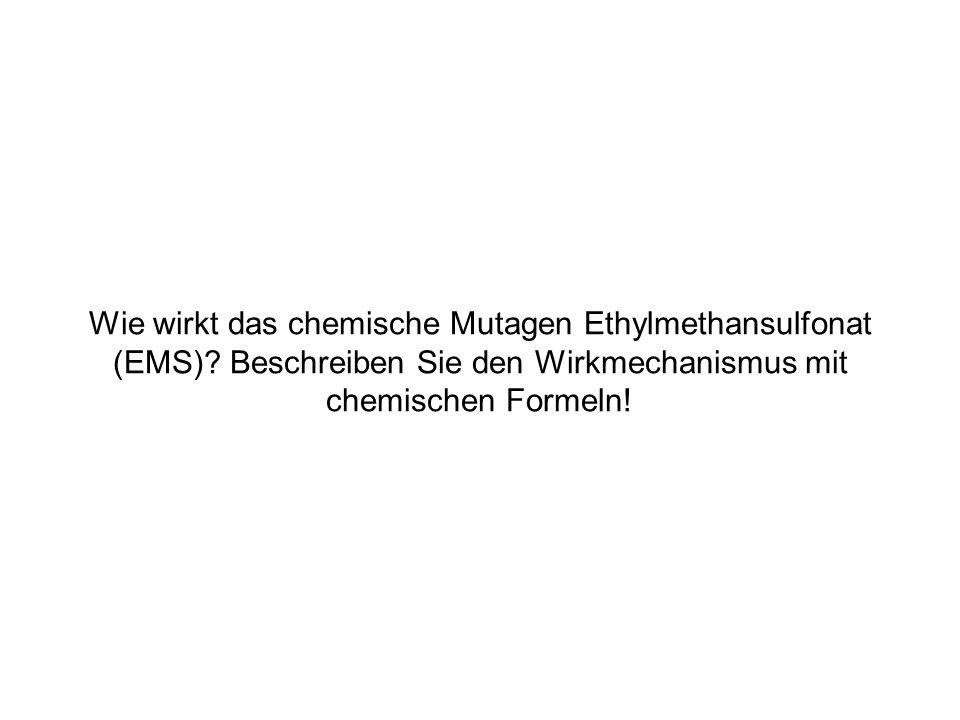 Wie wirkt das chemische Mutagen Ethylmethansulfonat (EMS)