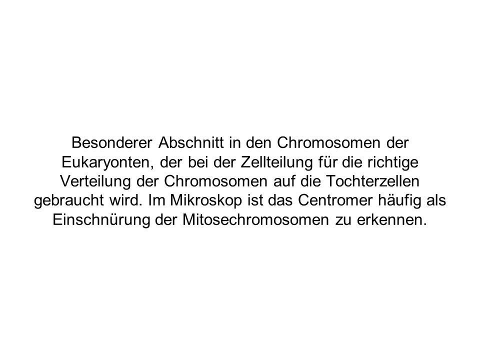 Besonderer Abschnitt in den Chromosomen der Eukaryonten, der bei der Zellteilung für die richtige Verteilung der Chromosomen auf die Tochterzellen gebraucht wird.