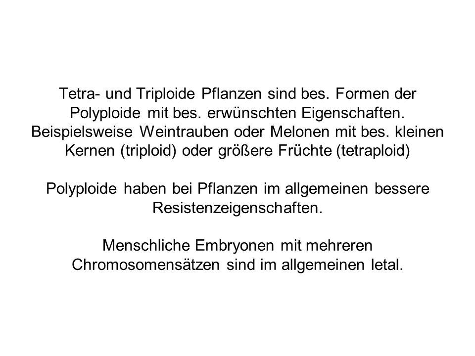 Tetra- und Triploide Pflanzen sind bes. Formen der Polyploide mit bes