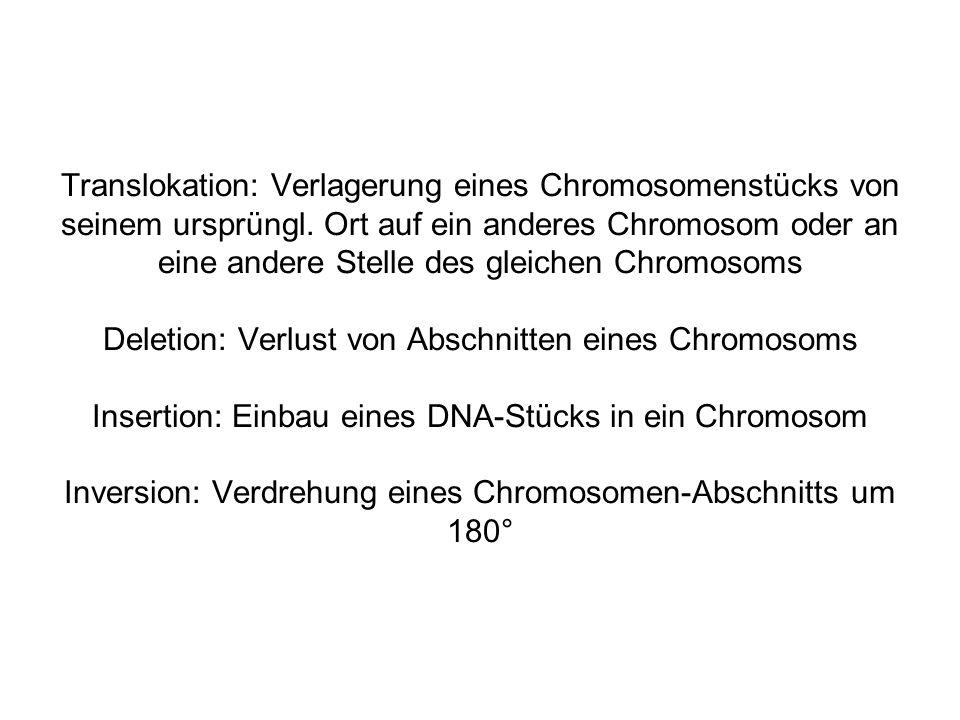 Translokation: Verlagerung eines Chromosomenstücks von seinem ursprüngl.