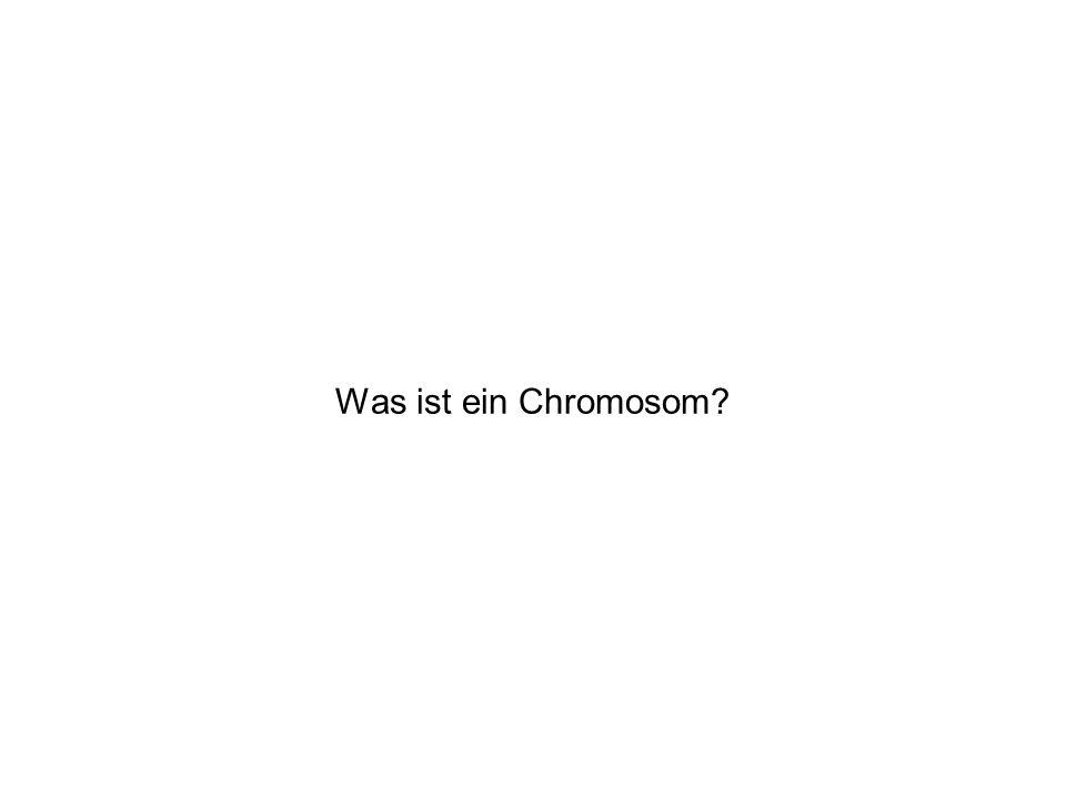 Was ist ein Chromosom