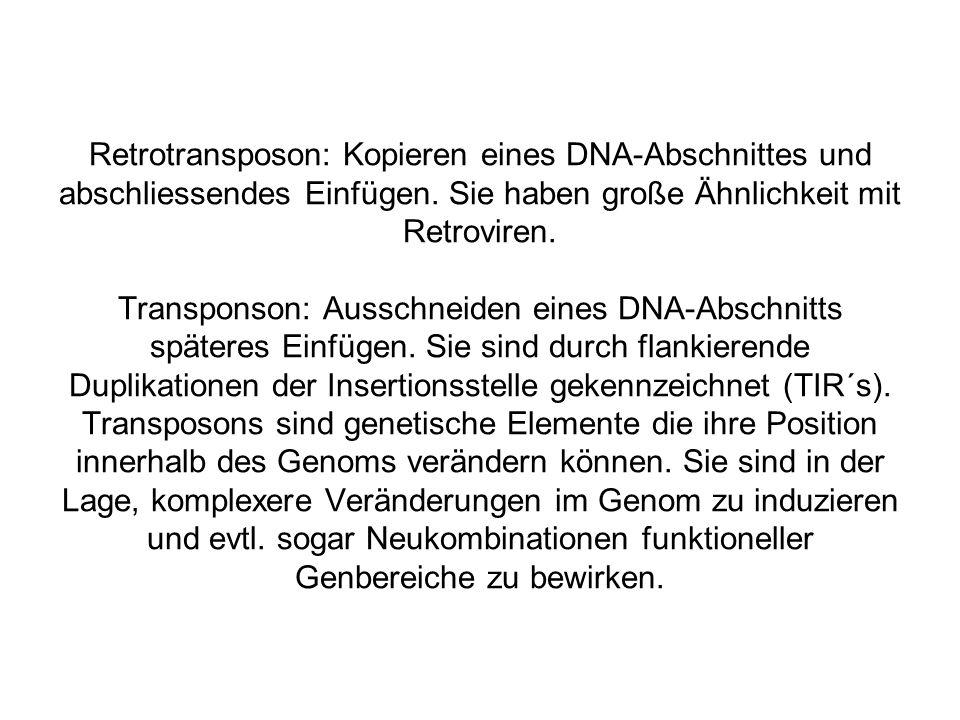 Retrotransposon: Kopieren eines DNA-Abschnittes und abschliessendes Einfügen.