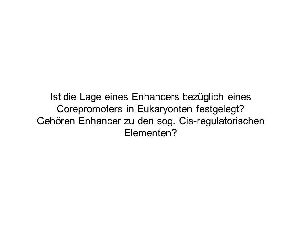Ist die Lage eines Enhancers bezüglich eines Corepromoters in Eukaryonten festgelegt.