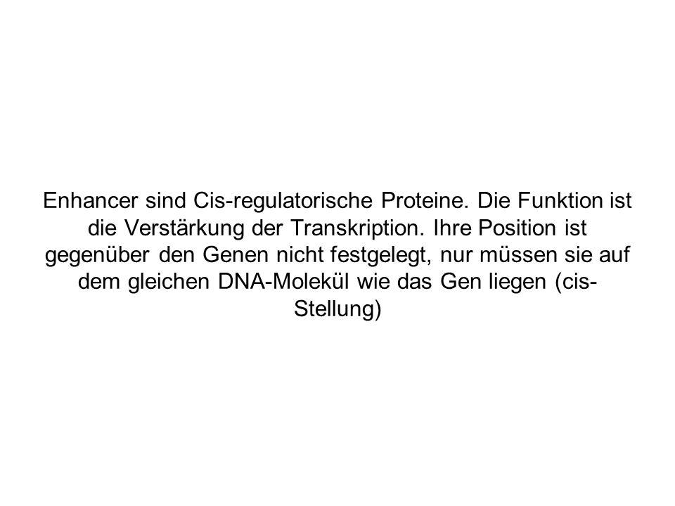 Enhancer sind Cis-regulatorische Proteine