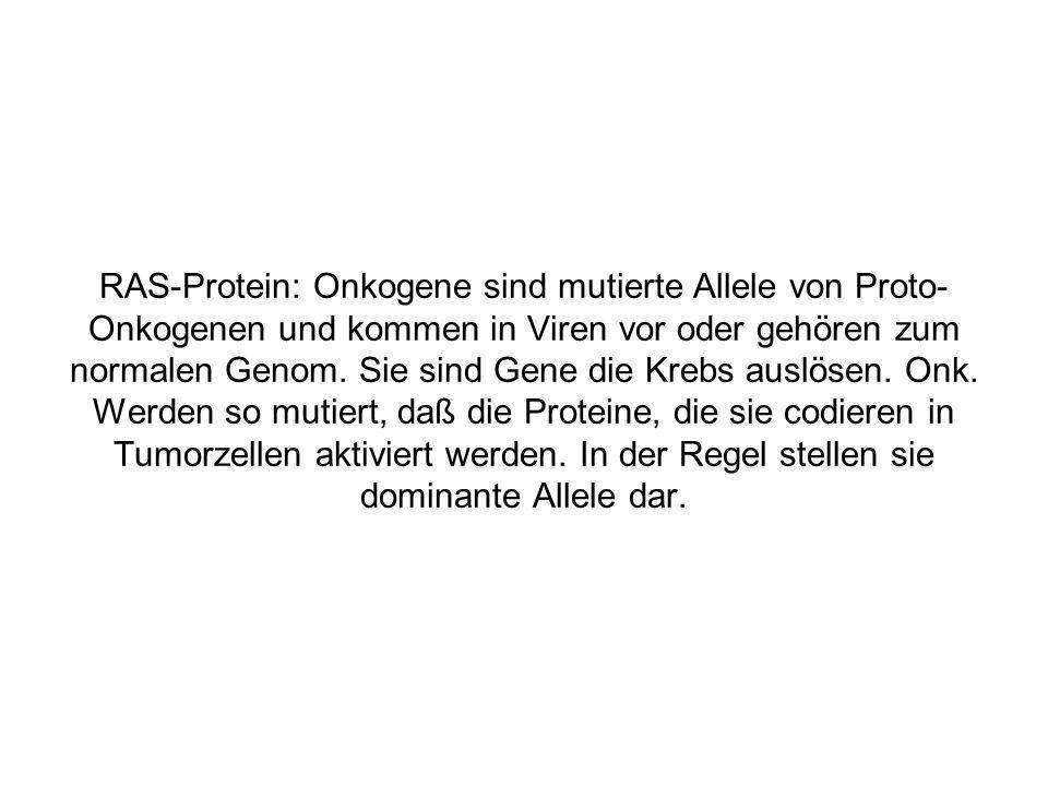 RAS-Protein: Onkogene sind mutierte Allele von Proto-Onkogenen und kommen in Viren vor oder gehören zum normalen Genom.