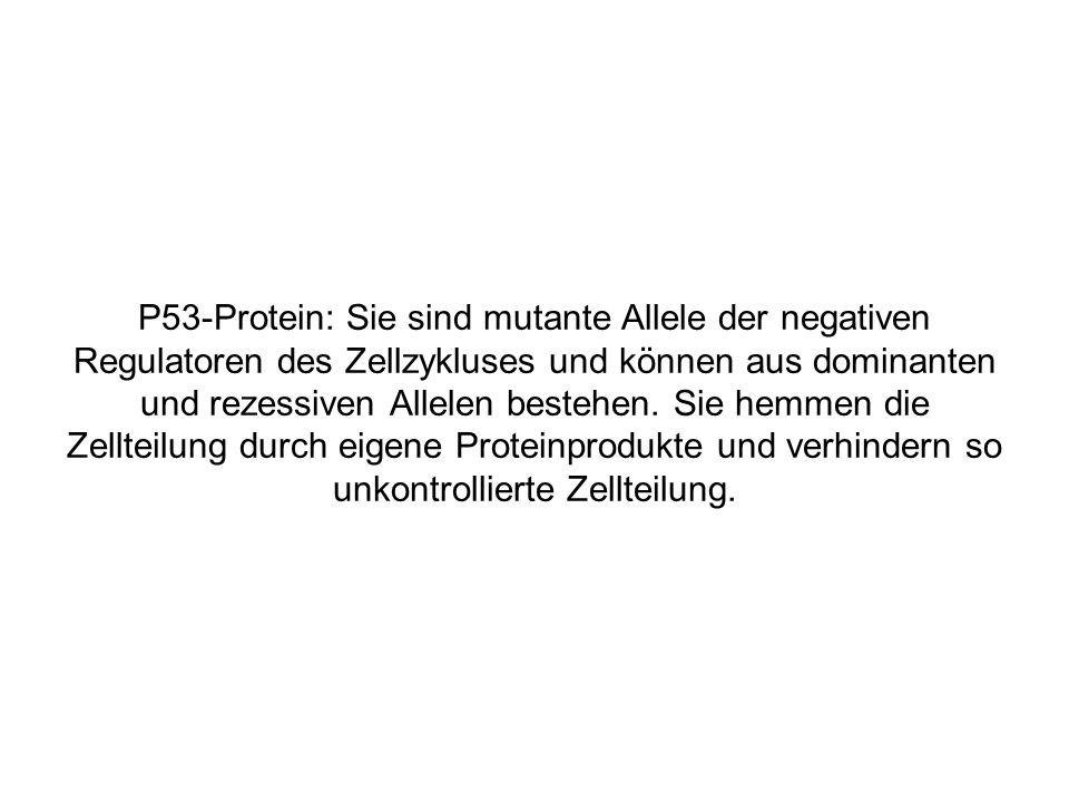 P53-Protein: Sie sind mutante Allele der negativen Regulatoren des Zellzykluses und können aus dominanten und rezessiven Allelen bestehen.