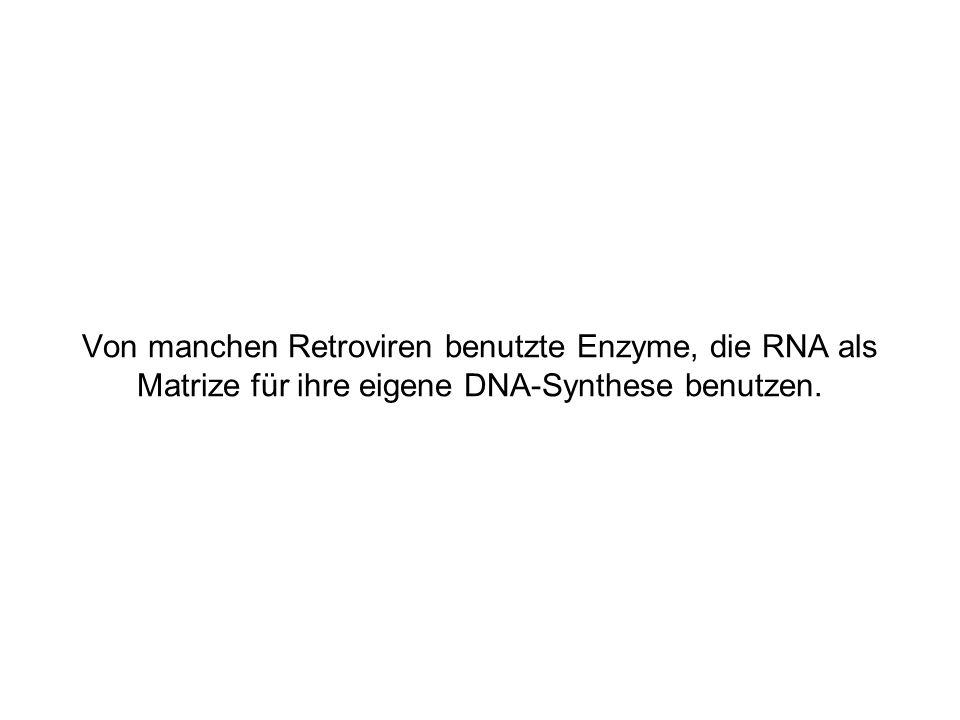 Von manchen Retroviren benutzte Enzyme, die RNA als Matrize für ihre eigene DNA-Synthese benutzen.