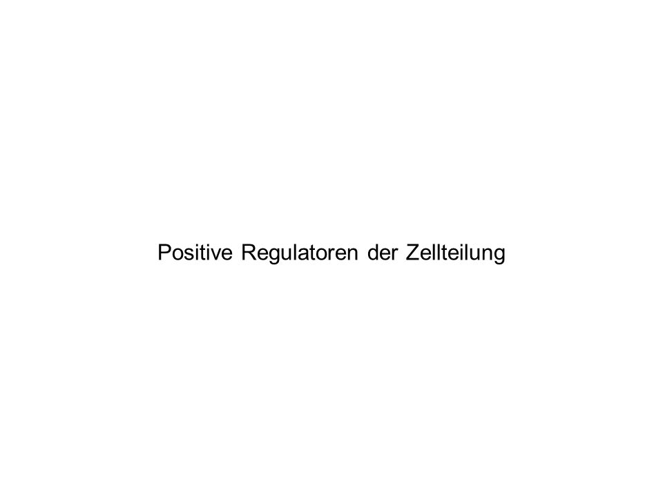 Positive Regulatoren der Zellteilung