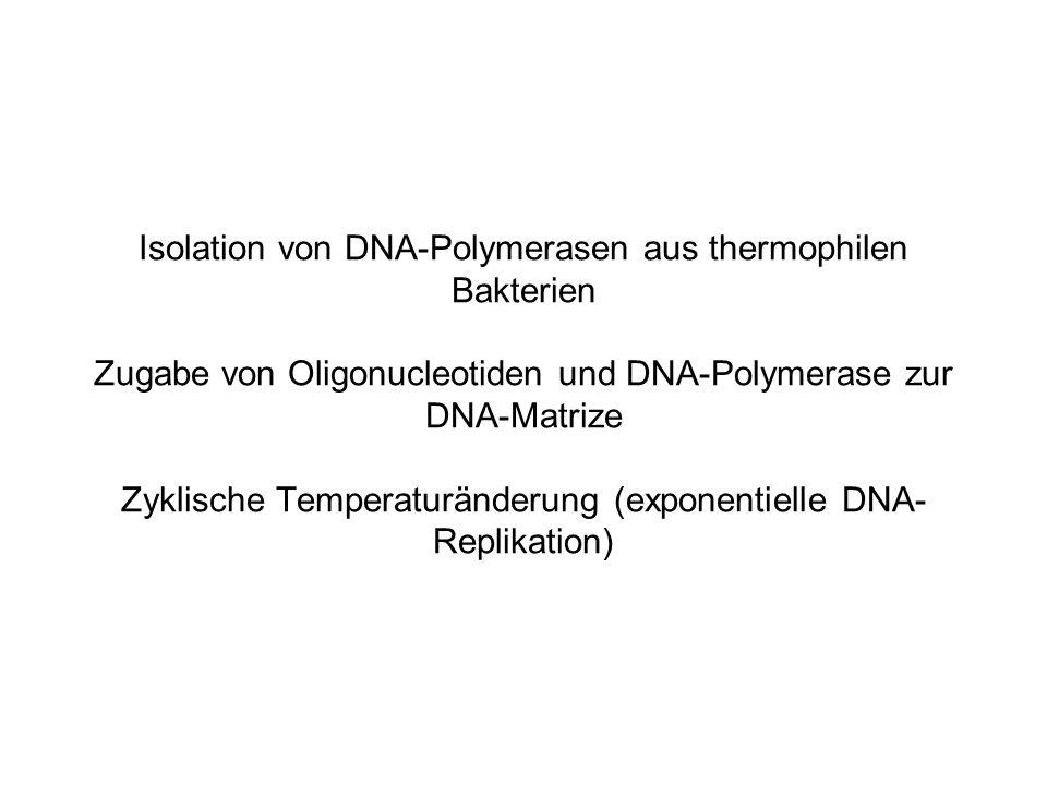 Isolation von DNA-Polymerasen aus thermophilen Bakterien Zugabe von Oligonucleotiden und DNA-Polymerase zur DNA-Matrize Zyklische Temperaturänderung (exponentielle DNA-Replikation)