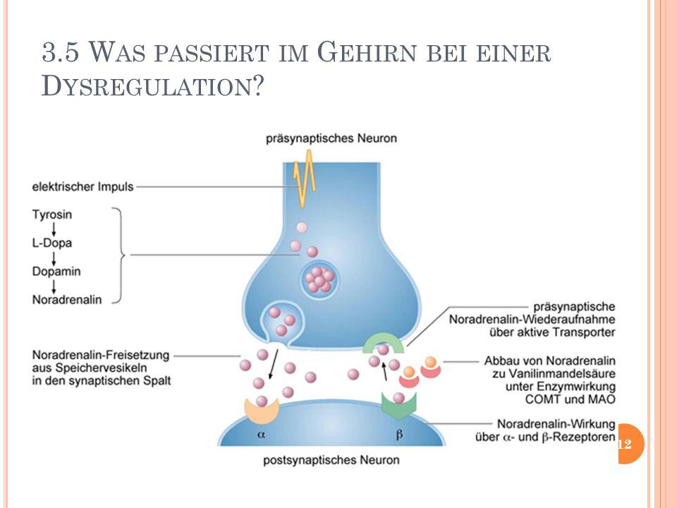 3.5 Was passiert im Gehirn bei einer Dysregulation