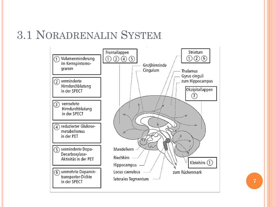 3.1 Noradrenalin System