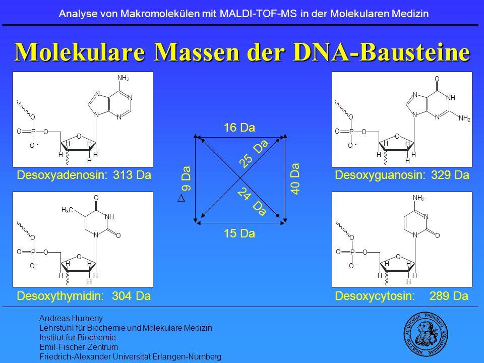 Molekulare Massen der DNA-Bausteine