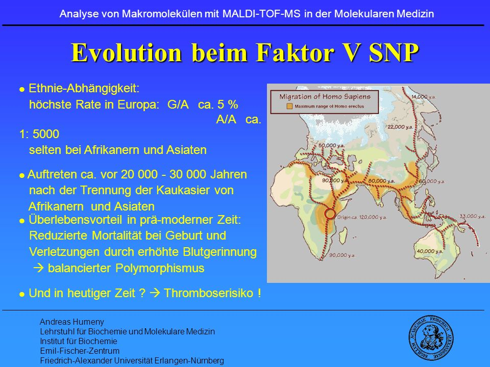 Evolution beim Faktor V SNP