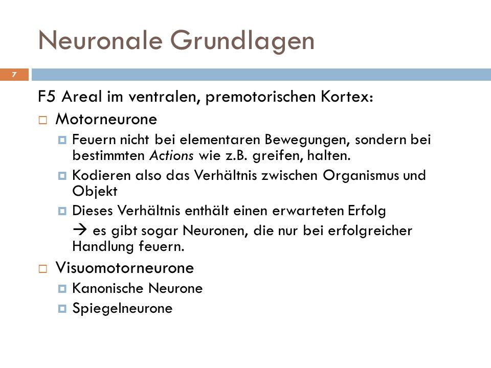 Neuronale Grundlagen F5 Areal im ventralen, premotorischen Kortex: