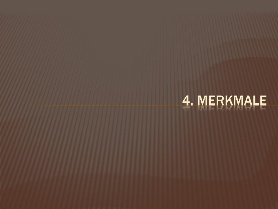 4. Merkmale
