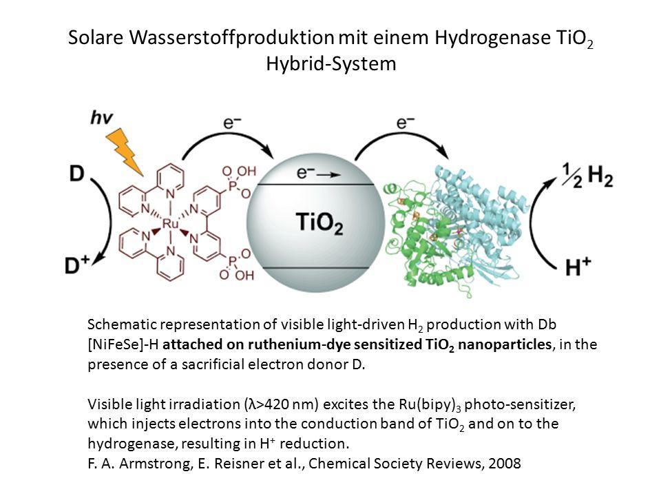 Solare Wasserstoffproduktion mit einem Hydrogenase TiO2 Hybrid-System