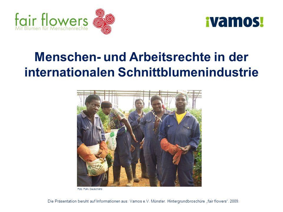 Menschen- und Arbeitsrechte in der internationalen Schnittblumenindustrie